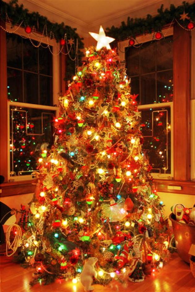 Рождественские елки фото